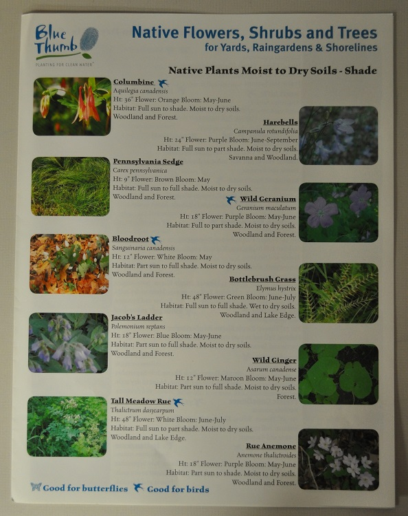 Native flowers, shrubs, and trees fact sheet
