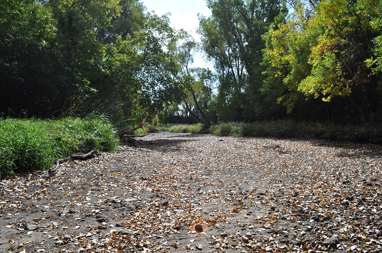 Dry creek bed
