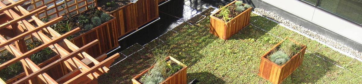A green roof absorbs stormwater and cuts heating costs.