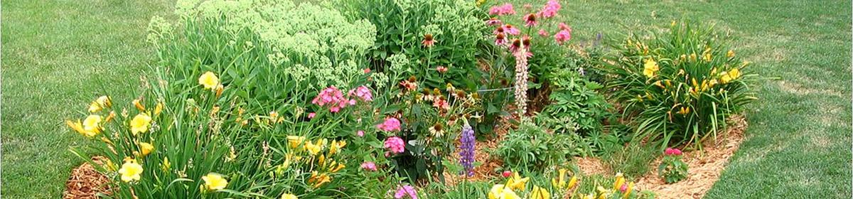 Raingardens catch runoff and spruce up lawns.