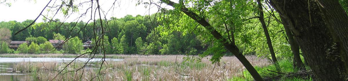 Saunders Lake Wetland