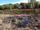 Stormwater pond near Steiger Lake
