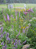 Native flowering plants