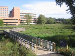 Boardwalk along the creek at Methodist Hospital