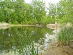 Pamela Park Pond
