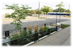 Arboretum planting in parking lot